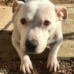 Angel - RESERVED