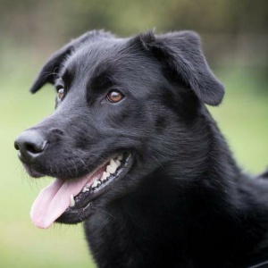 Sid - not available for rehoming just yet thanks!