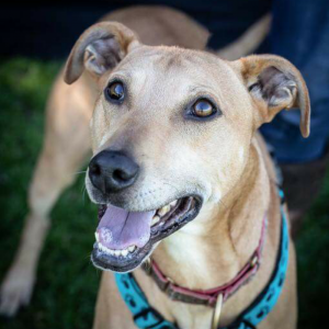 Maximus - needs experienced foster or furever home