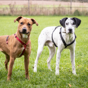 Dora and Chase - to be rehomed together