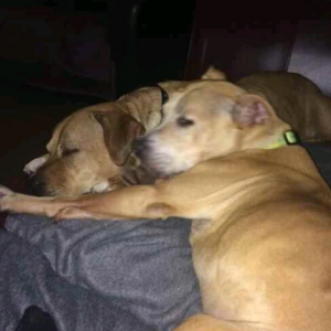 Roxy and Reggie -Adopted