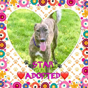 Star Adopted