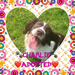 Charlie Adopted