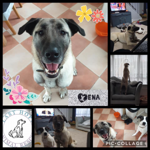 Xena on home trial