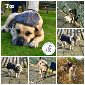 Tor on home trial