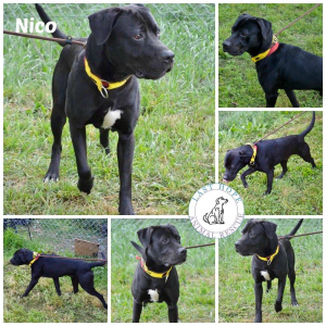 Nico  - rural home needed